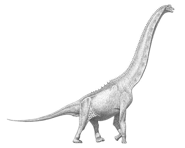 48.sauropod-skin-large