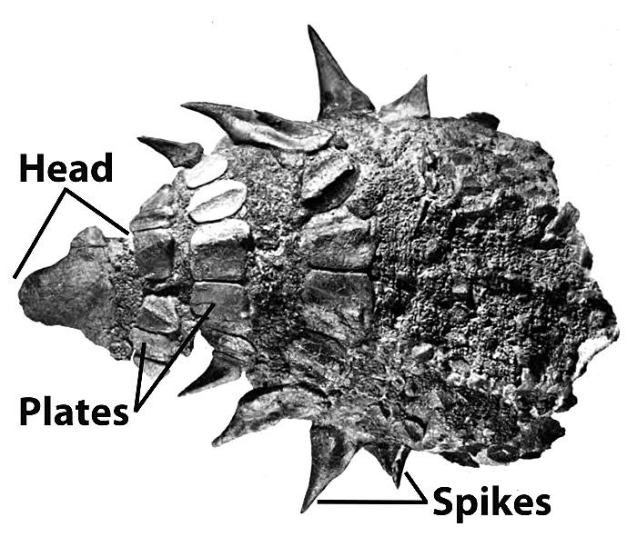 49.nodosaur-armor-large