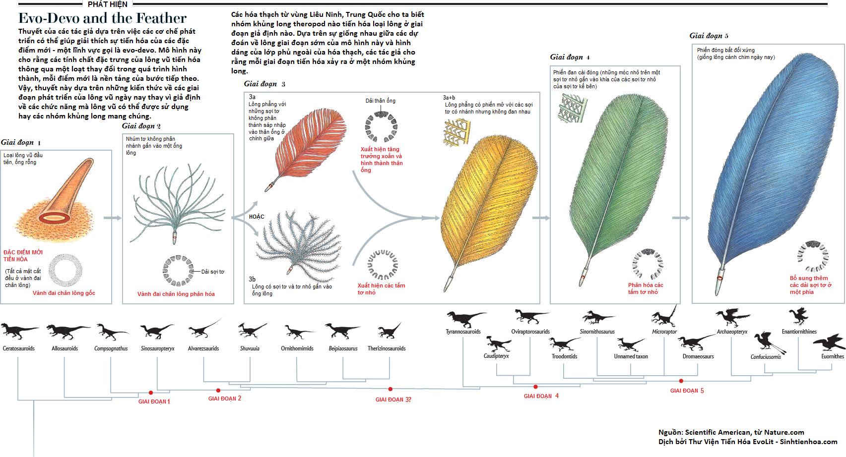nature-evodevo-feather