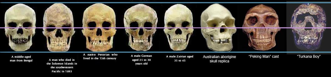 Kết quả hình ảnh cho human races turkana boy