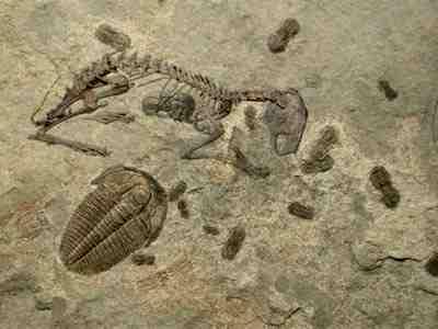 Kết quả hình ảnh cho bunny in cambrian