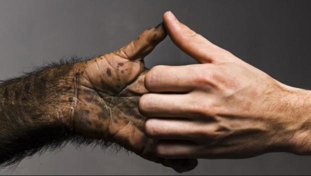chimp-hand