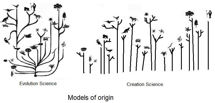 creation-orchard-eww