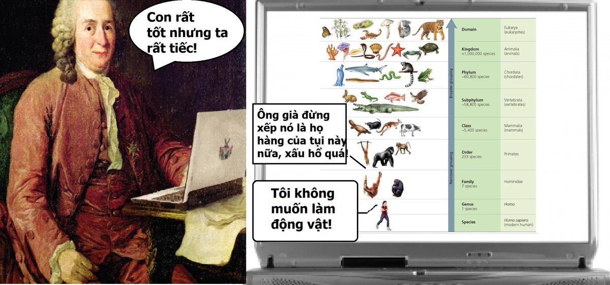 CHÚNG TA LÀ SÚC SINH! (NHƯNG ĐỪNG ĐỔ THỪA THUYẾT TIẾN HÓA) - Phân loại Linnaeus đặt con người về đúng vị trí của mình, Phần 1.